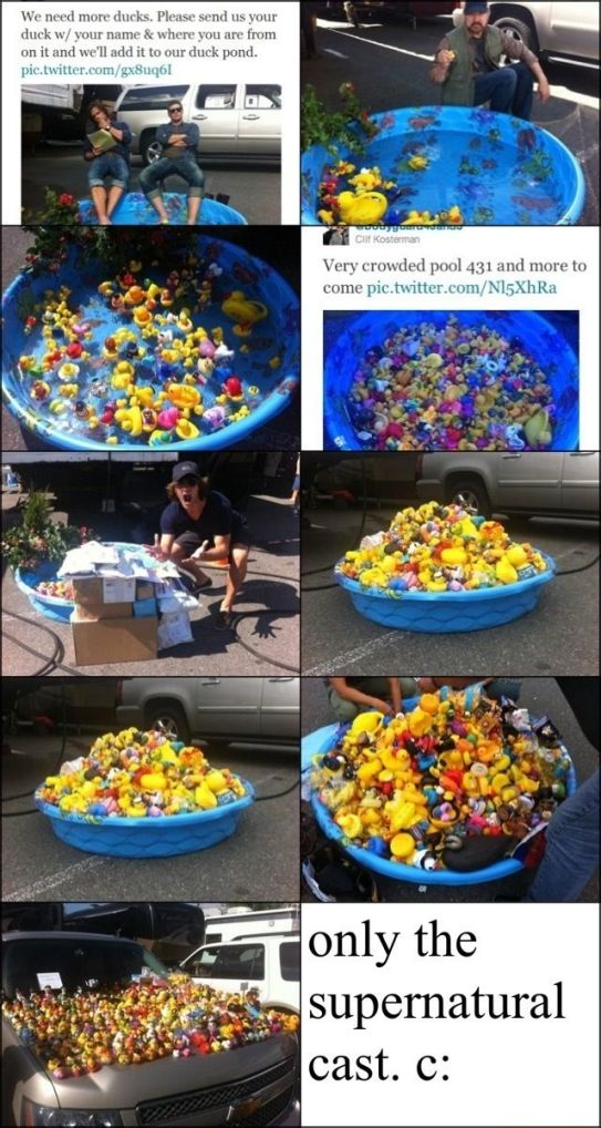 397ca95591b7b7e26a3b5bbd3edf9cc4--kiddie-pool-duck-pond